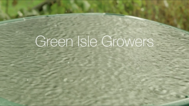 Green Isle growers